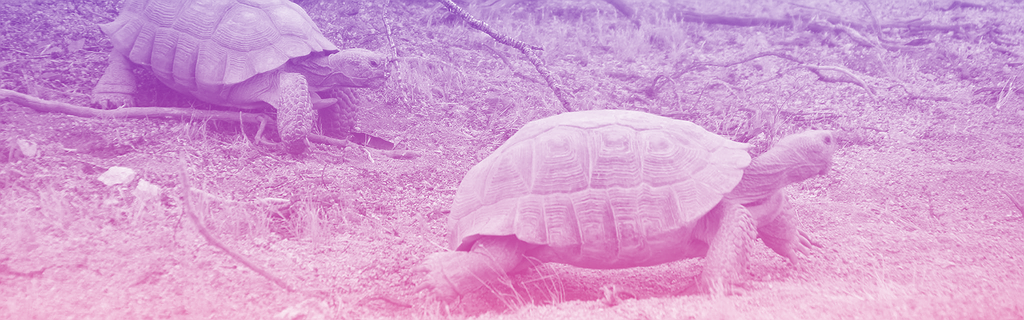 tortues avançant lentement