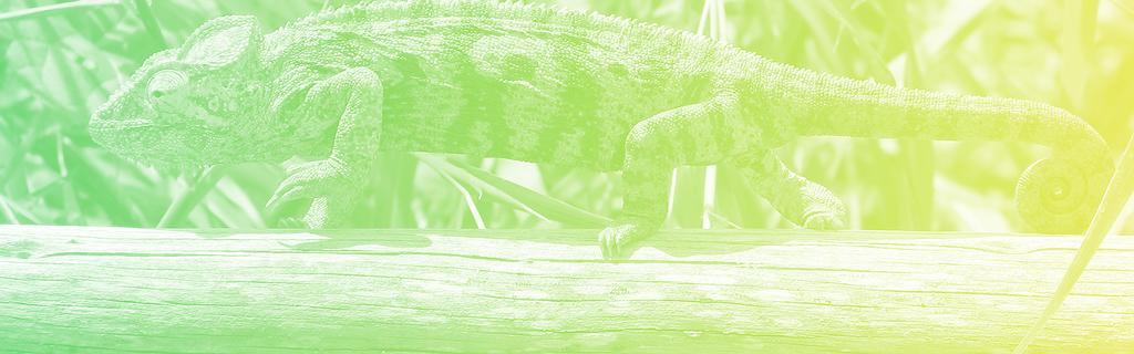 comme le caméléon, le bonus et la prime à la conversion changent régulièrement de couleur en fonction de la situation.