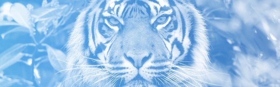 Un tigre.