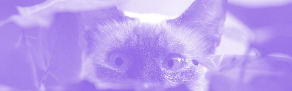 Un chat en ambuscade