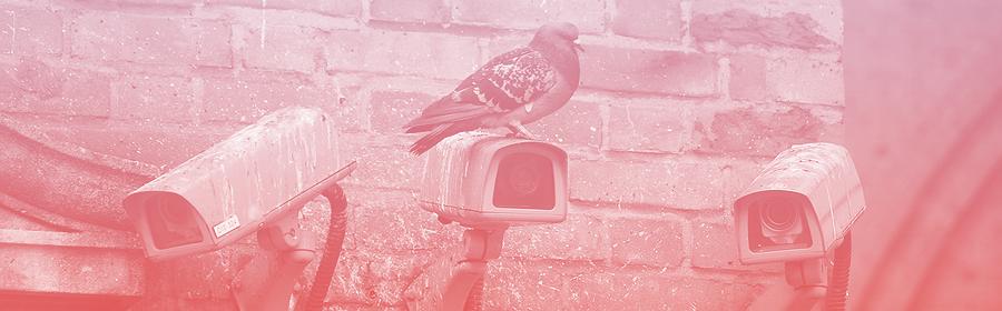 Un pigeon sur une caméra de surveillance